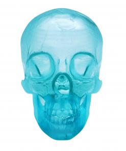Reproduction crâne humain face